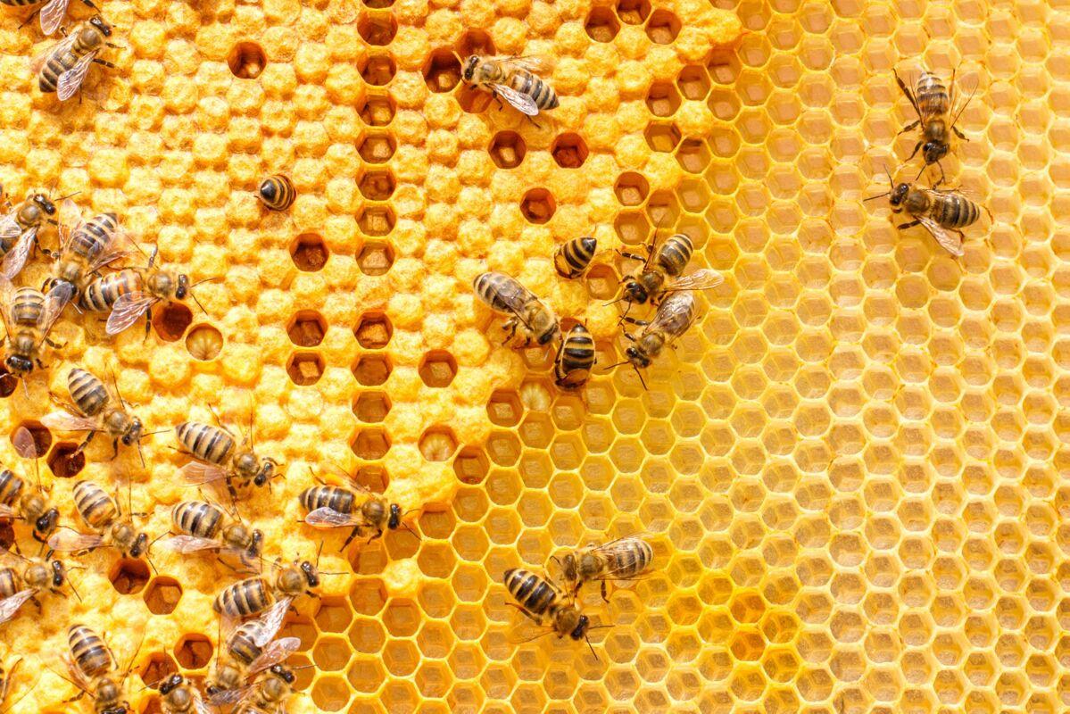L'arborescence d'un site web est telle une ruche. Chacune de ses parties est bien disposée.